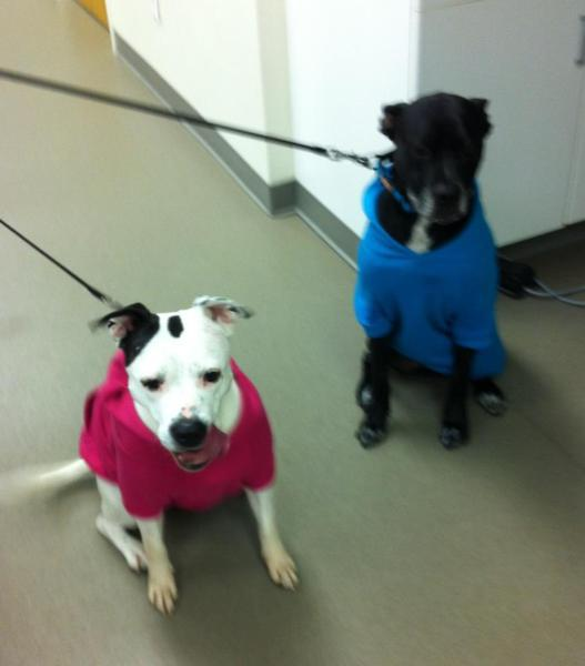 mj and lola dressed for cold weather