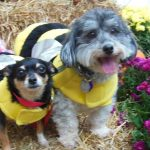 Bee dogs