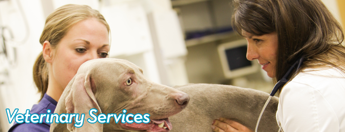 Town 'N' Country Animal Hospital Services