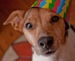 Happy Birthday www.veterinarian-hospital.com