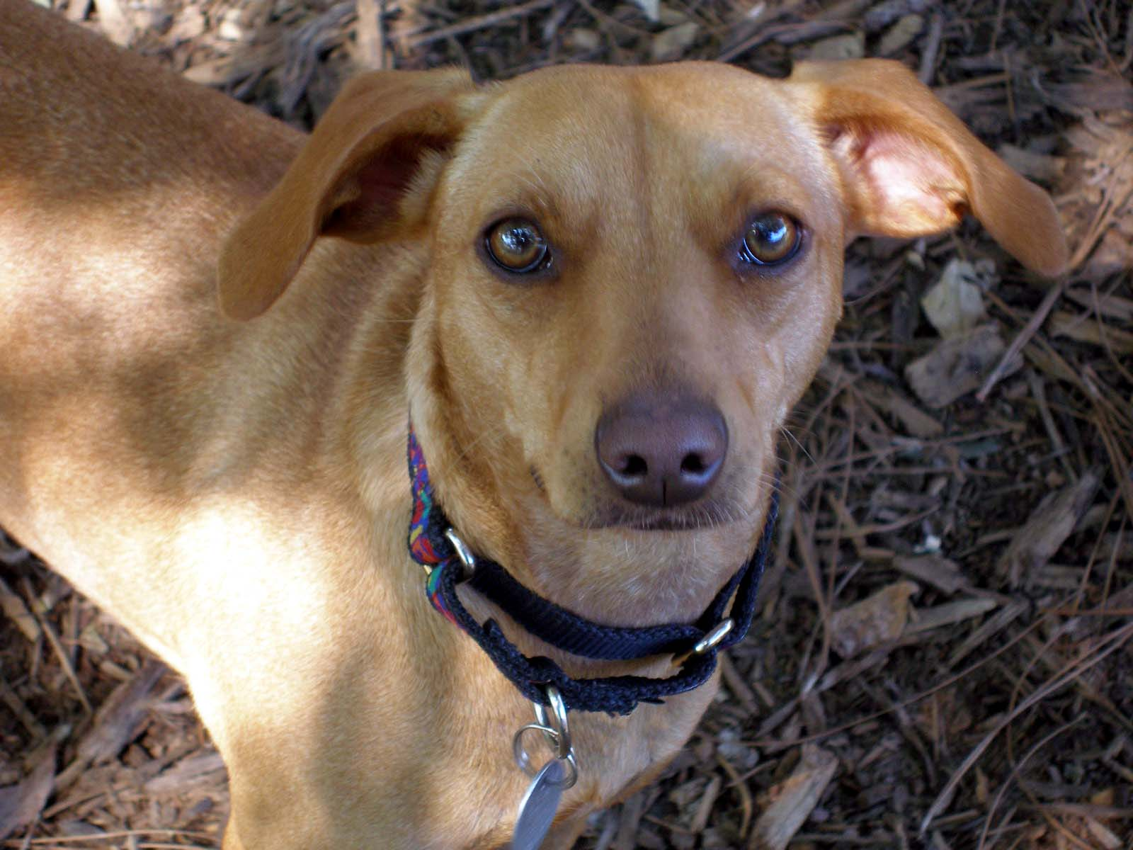 Kenzie The Lost And Found Story Of A Rescue Dog Town N Country Animal Hospital Burlington Nc