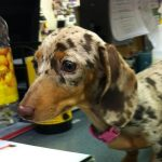 dappled dog