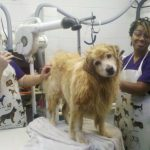 dog gets a bath at the spa