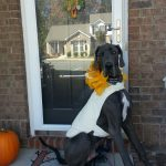 town and country halloween contest