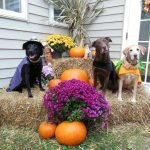 3 dressed up dogs