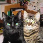 Huck & Roxy