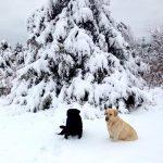 Marcia McKinney dogs