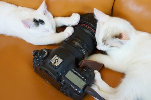 cat contest