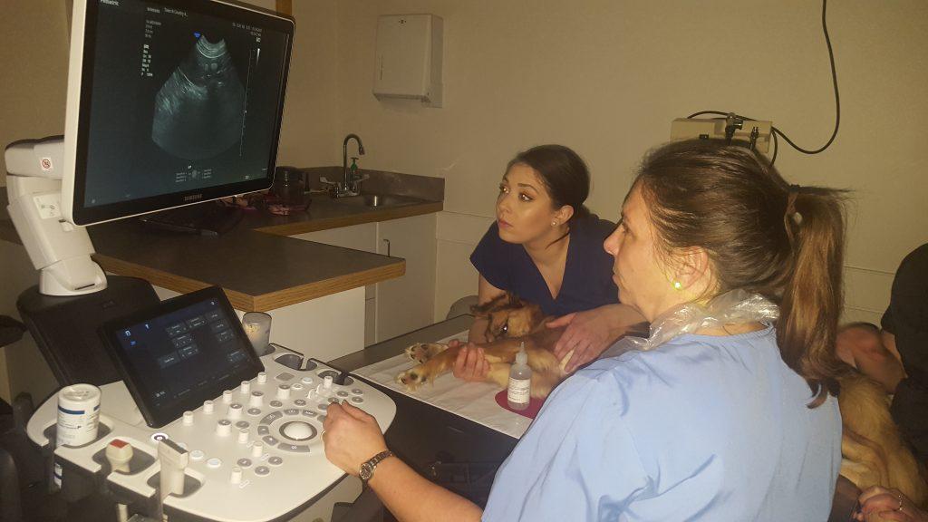 examining ultrasound
