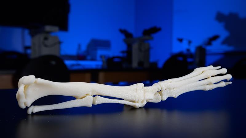 cayde bone