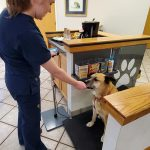 fear free dog scales